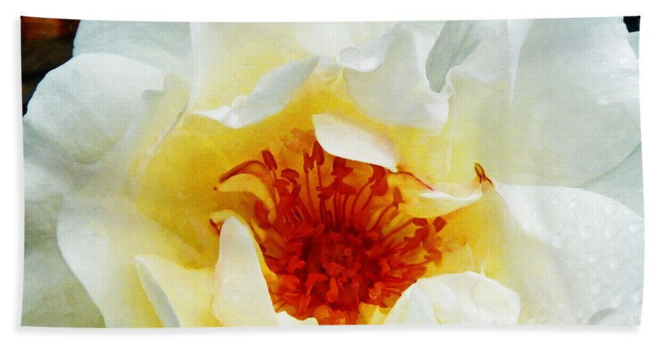 Rose Beach Towel featuring the photograph Sunshine On A Rainy Day by Steve Taylor