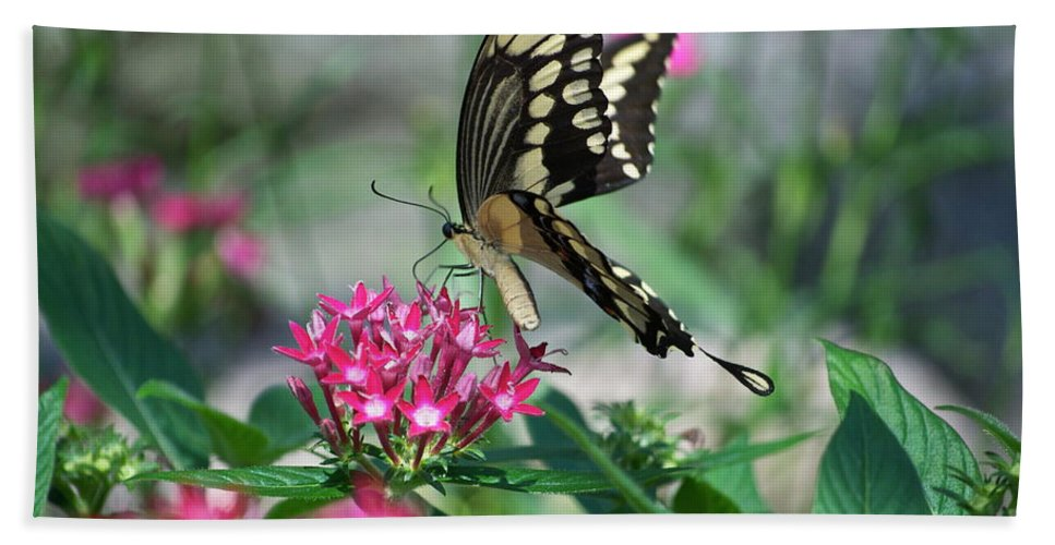 Il Beach Towel featuring the photograph Swallowtail Butterfly 01 by Thomas Woolworth