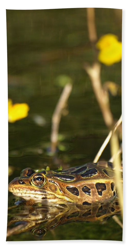 James Beach Towel featuring the photograph Swamp Muscian by James Peterson