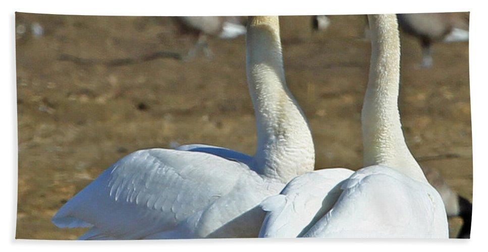 Swan Beach Towel featuring the photograph Swan Pair by Dee Carpenter