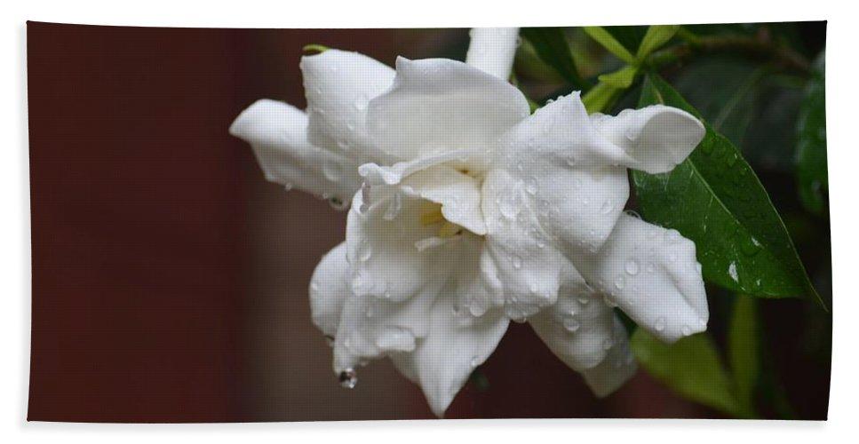 Sweet Gardenia Rain Beach Towel featuring the photograph Sweet Gardenia Rain by Maria Urso