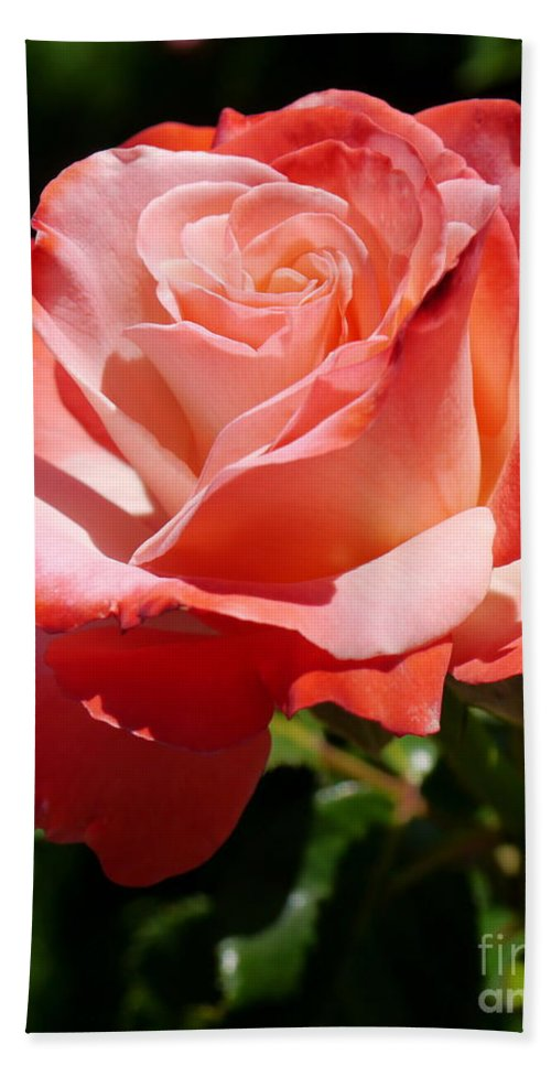 Rose Beach Towel featuring the photograph Sweet Rosie by Christiane Schulze Art And Photography