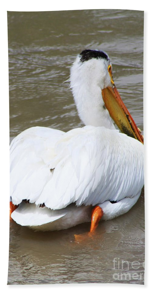 Bird Beach Towel featuring the photograph Swimming Away by Alyce Taylor