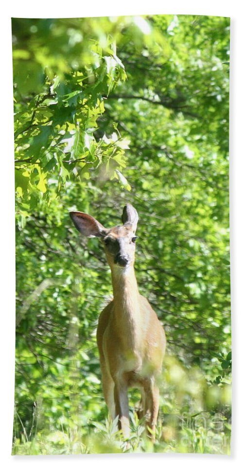 Deer Beach Towel featuring the photograph Taken Aback by Neal Eslinger