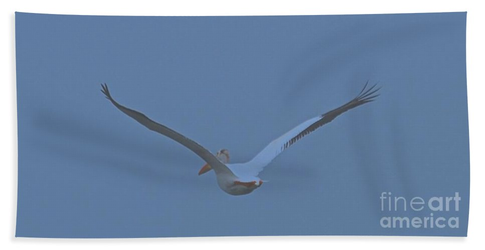 Pelican Beach Towel featuring the photograph Taking Flight by Leanne Matson