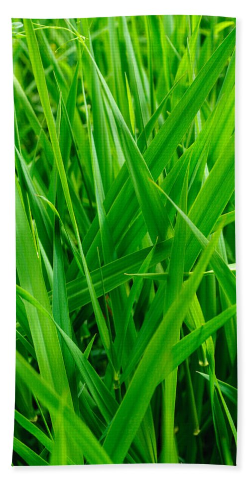 Nature Beach Towel featuring the photograph Tall Green Grass by Tikvah's Hope