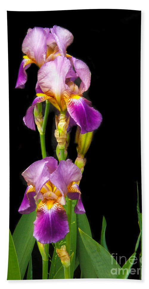 Flower Beach Towel featuring the photograph Tall Iris by Robert Bales