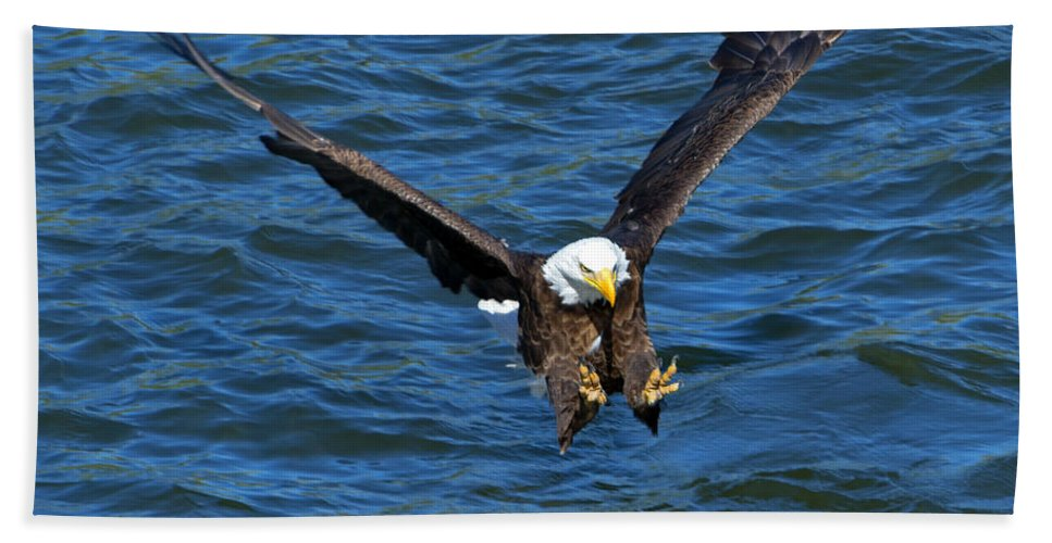 Bald Eagle Beach Towel featuring the photograph Talons First by Mike Dawson