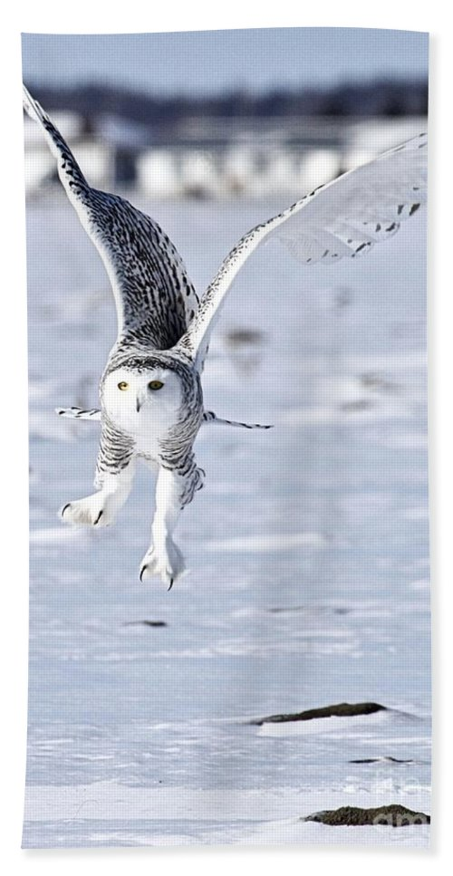 Wildlife Photography Beach Towel featuring the photograph Talonted by Heather King