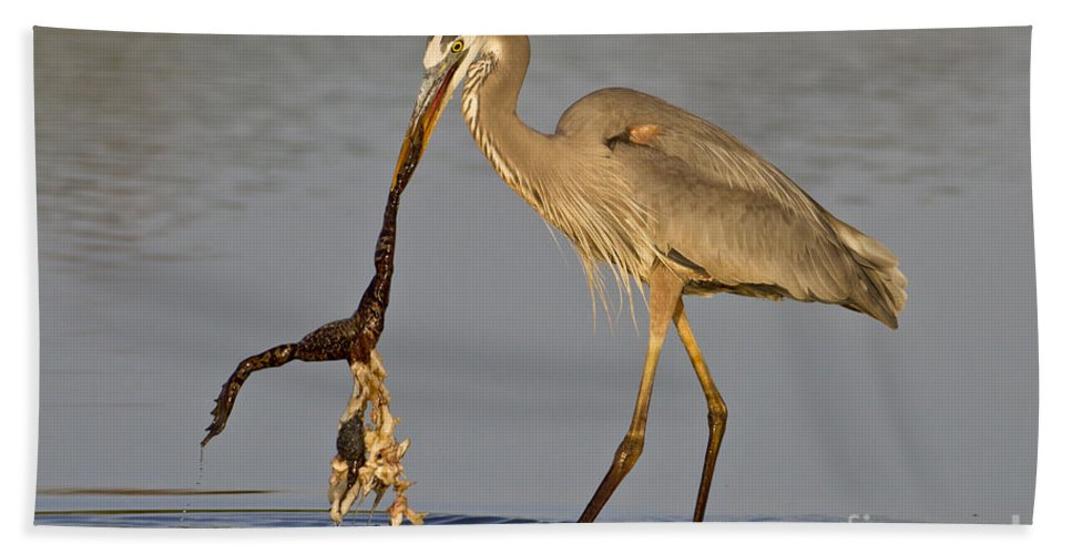 Great Blue Heron Beach Towel featuring the photograph Tastes Like Chicken by Bryan Keil