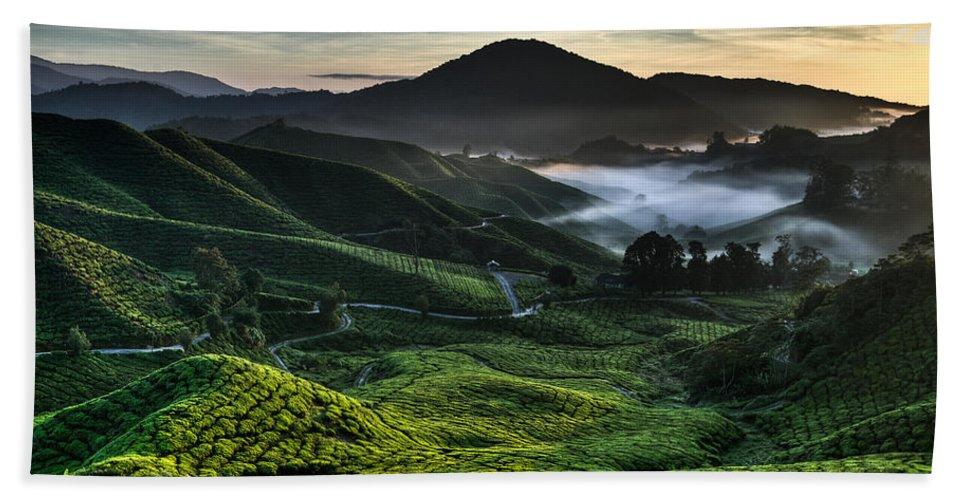 Tea Plantation Beach Towel featuring the photograph Tea Plantation At Dawn by Dave Bowman