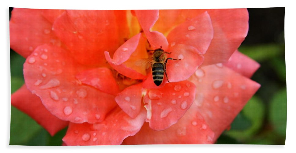 Rose Beach Towel featuring the photograph Teardrops And Bee by Christiane Schulze Art And Photography