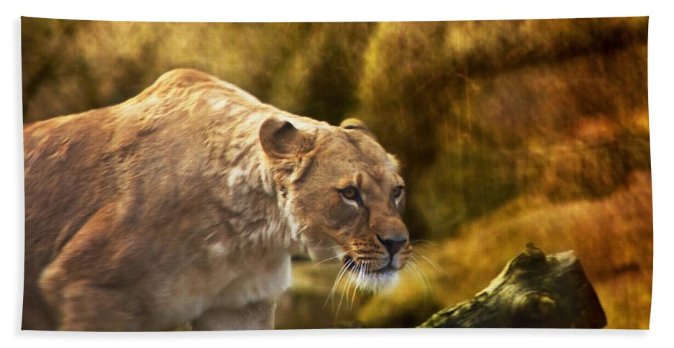 Animal Beach Towel featuring the photograph The Approach by Belinda Greb