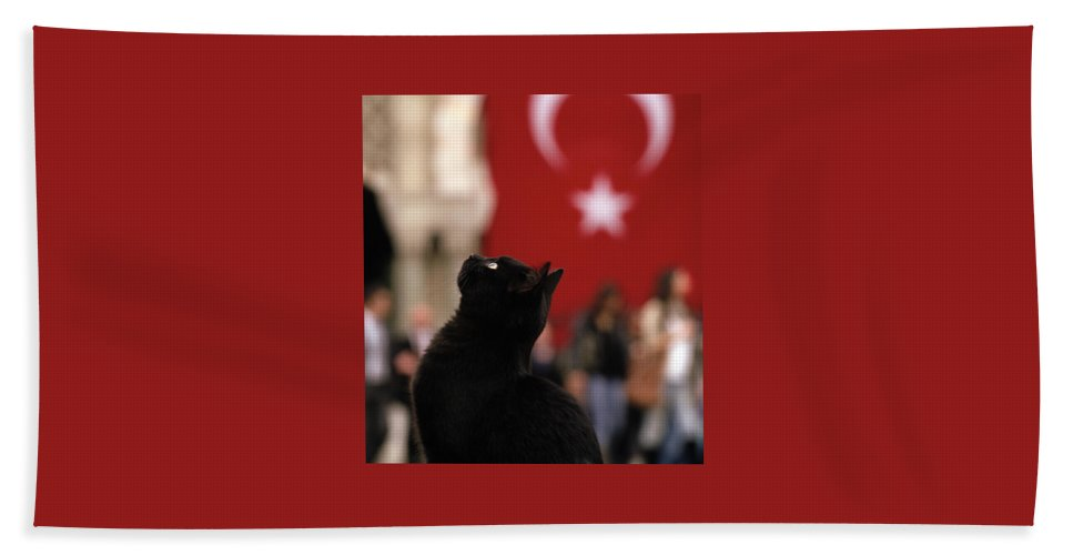 Cat Beach Towel featuring the photograph The Black Cat by Shaun Higson