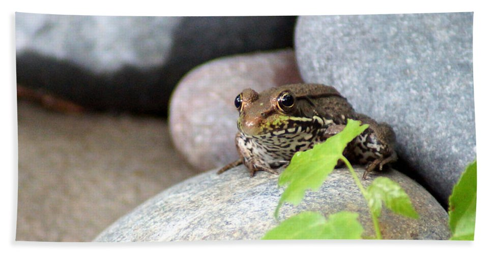The Bronze Frog Beach Towel featuring the photograph The Bronze Frog by Kim Pate