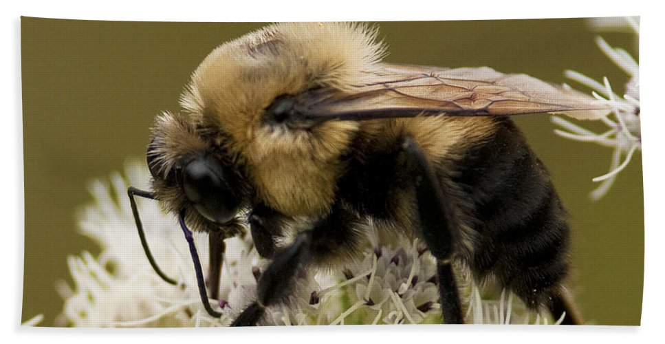 Festblues Beach Towel featuring the photograph The Bumble Bee.. by Nina Stavlund