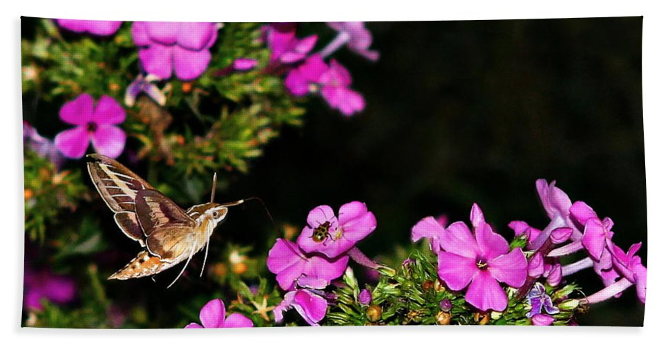 White-lined Sphinx Hummingbird Beach Towel featuring the photograph The Butterfly Garden At Night by Elizabeth Winter