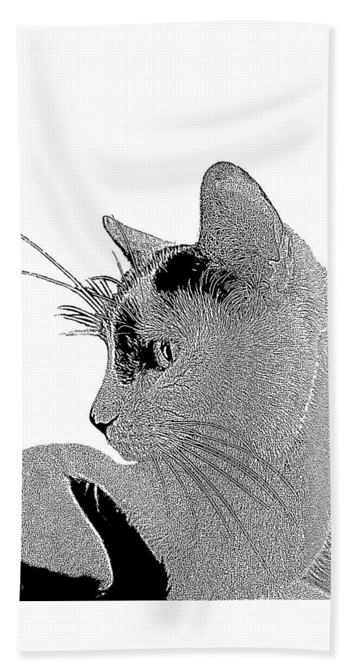 Cat Beach Towel featuring the photograph The Cat by Ben and Raisa Gertsberg