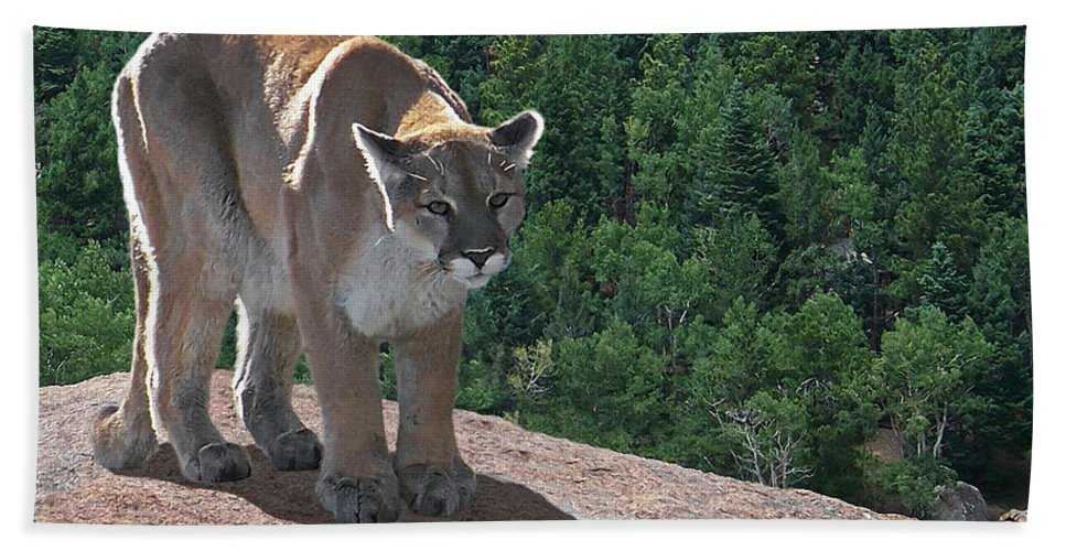 Cats Beach Towel featuring the digital art The Cougar 1 by Ernie Echols