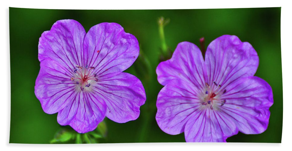 Flowers Beach Towel featuring the photograph The Couple by Greg Norrell
