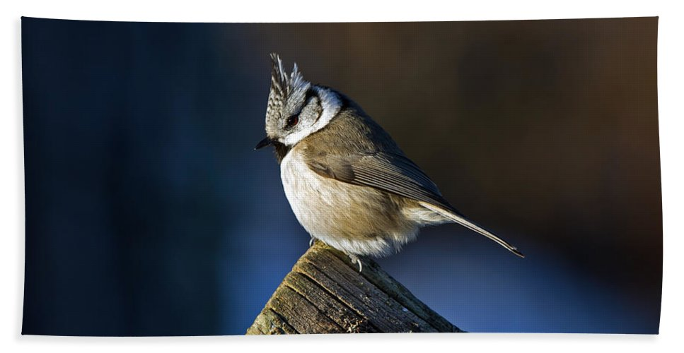 Crested Tit Beach Towel featuring the photograph The Crested Tit In The Sun by Torbjorn Swenelius
