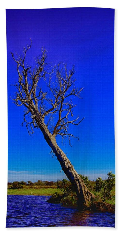 Death Beach Towel featuring the photograph The Death Of A Tree V5 by Douglas Barnard