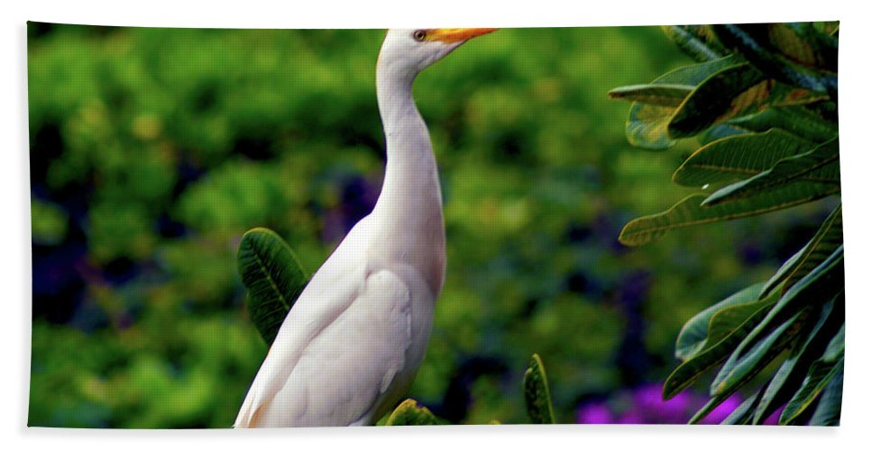 Fine Art Photography Beach Towel featuring the photograph The Egret Outside My Window by Patricia Griffin Brett