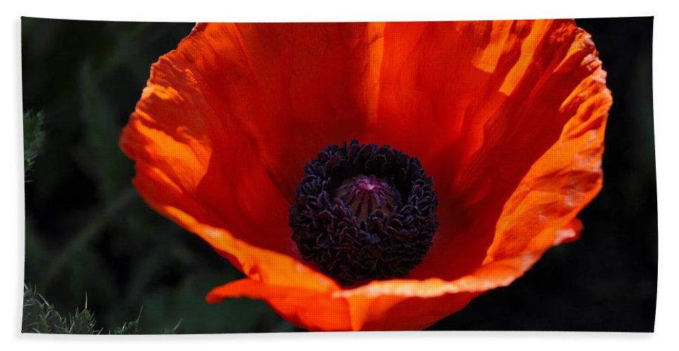 Poppy Beach Towel featuring the digital art The Empess In Red by Jim Brage