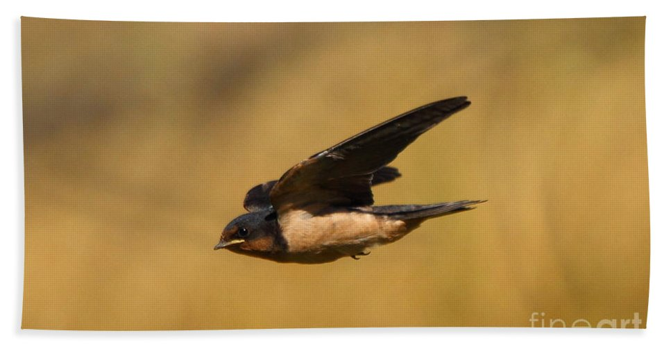 Animal Beach Towel featuring the photograph First Swallow Of Spring by Robert Frederick