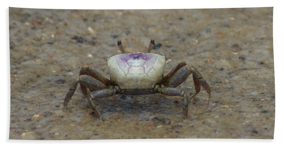 A Fiddler Crab Beach Towel featuring the photograph The Fiddler Crab On Hilton Head Island by Kim Pate