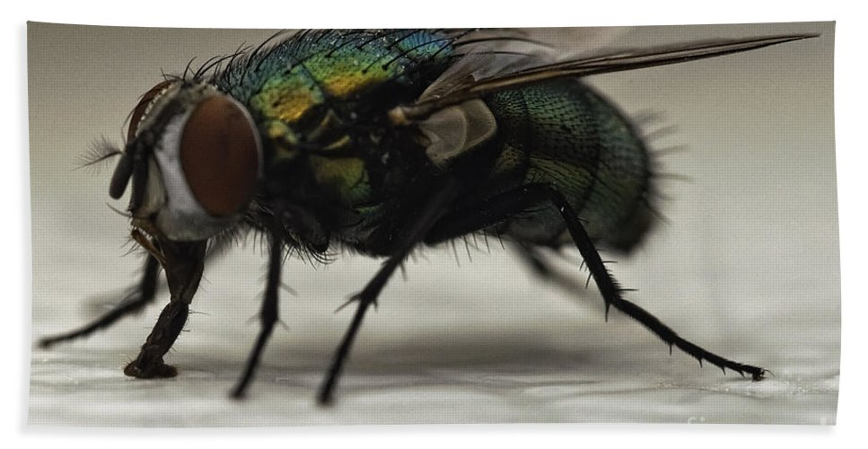 Fly Beach Towel featuring the photograph The Fly Macro by Michael Ver Sprill