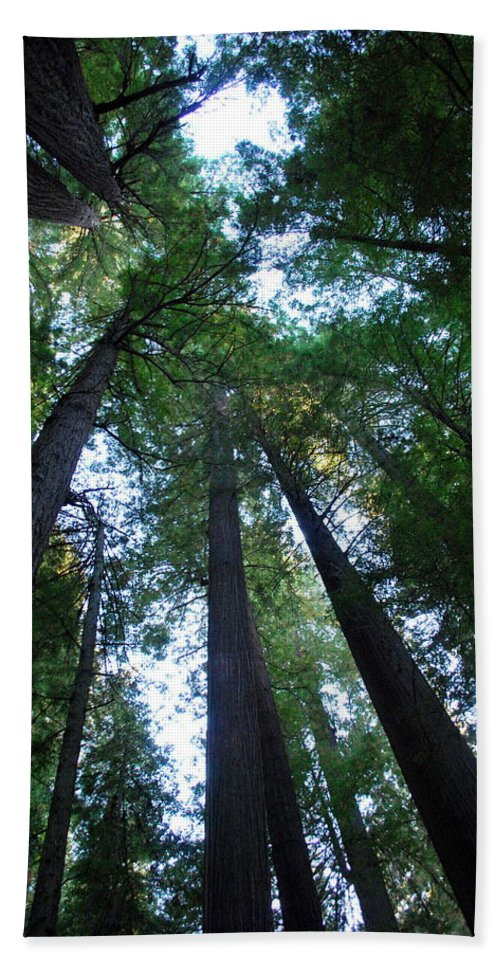 Redwoods Beach Towel featuring the photograph The Giant Redwoods I by Kathy Sampson