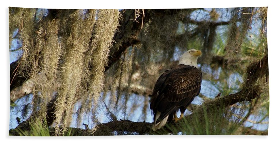Bald Eagle Beach Towel featuring the photograph The Great Bald Eagle by Patricia Twardzik