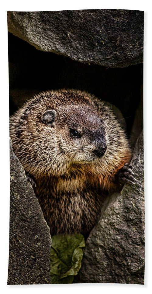 Groundhog Beach Towel featuring the photograph The Groundhog by Bob Orsillo