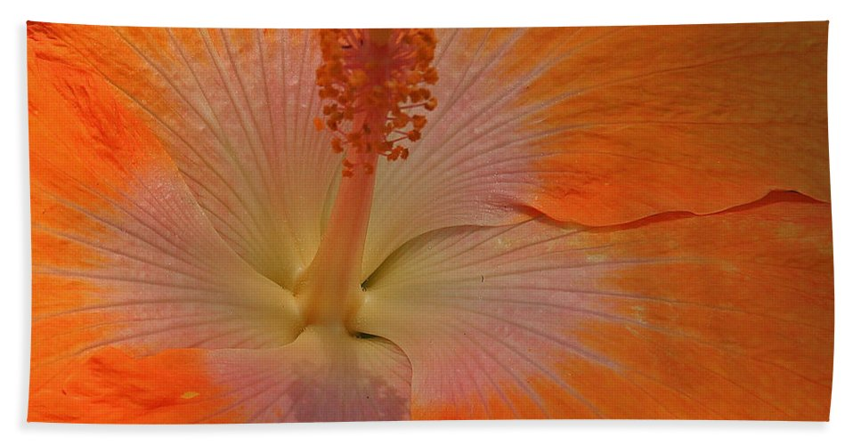 Orange Beach Towel featuring the photograph The Heart Of A Hibiscus by Kris Hiemstra