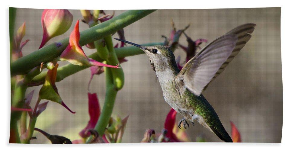 Hummingbird Beach Towel featuring the photograph The Hummingbird And The Slipper Plant by Saija Lehtonen