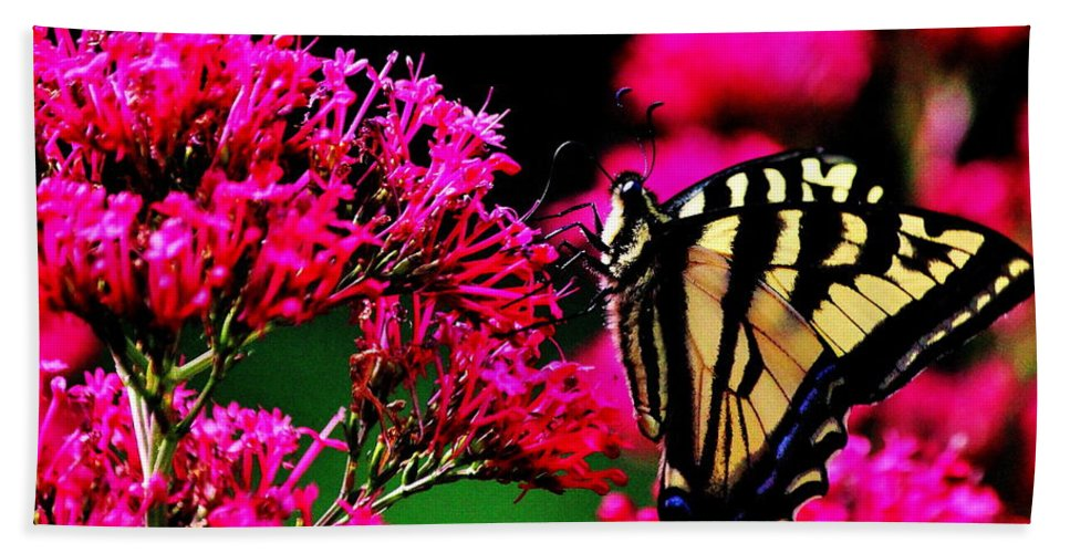 Butterfly Beach Towel featuring the photograph The Hungry Butterfly by Benjamin Yeager