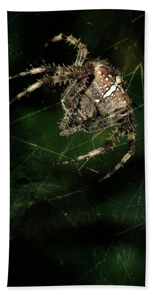 Spider Beach Towel featuring the photograph The Hunter by Jaroslaw Blaminsky