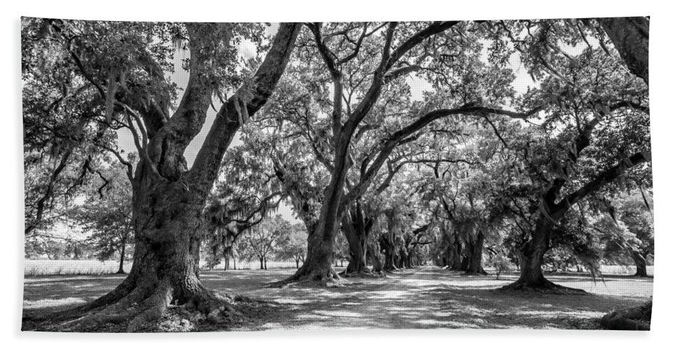 Evergreen Plantation Beach Towel featuring the photograph The Lane Bw by Steve Harrington