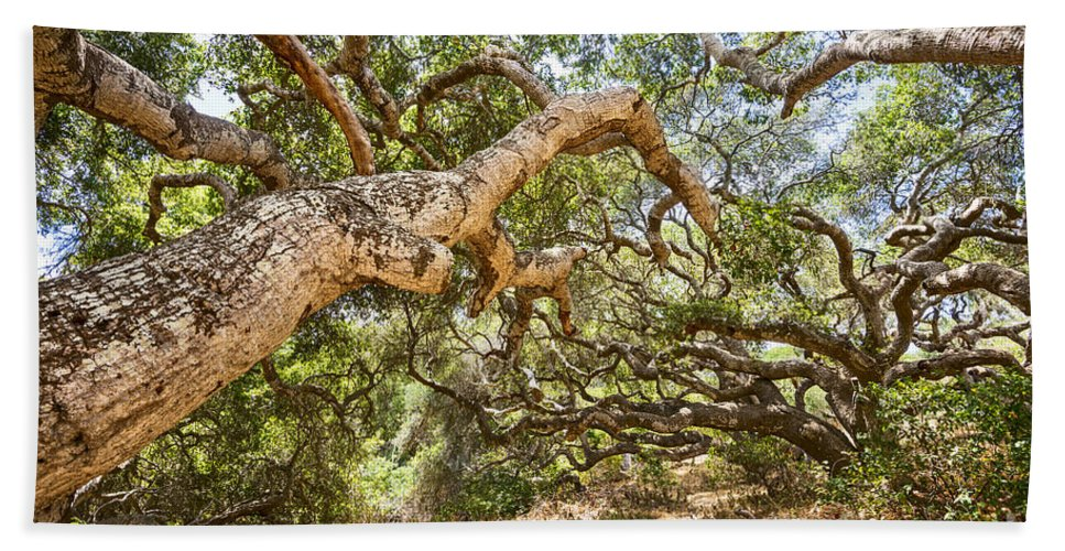 Los Osos Oak State Natural Reserve Beach Towel featuring the photograph The Life Of Oaks - The Magical Trees Of The Los Osos Oak Reserve by Jamie Pham