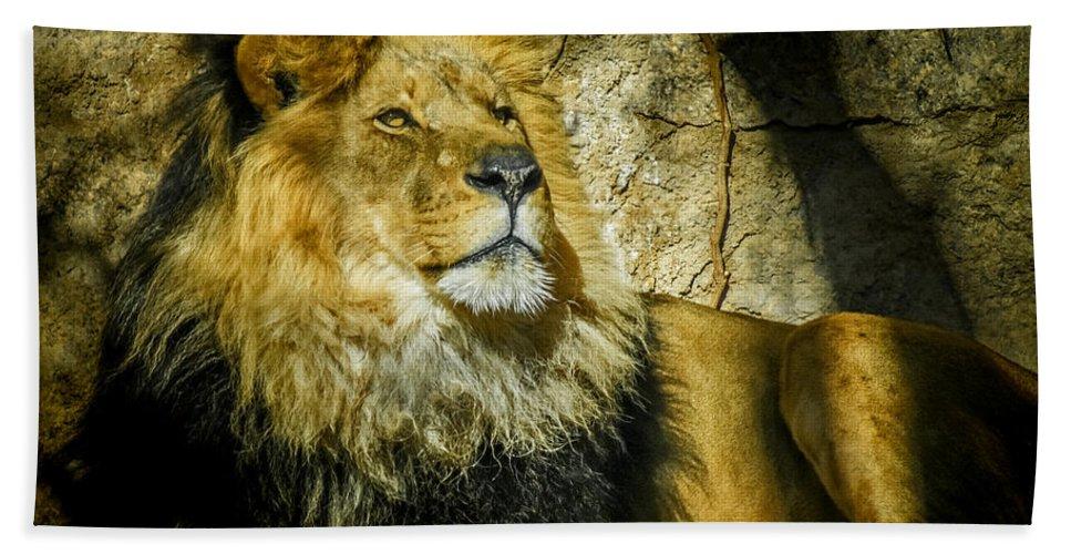 Lion Beach Towel featuring the photograph The Lion by Ernie Echols