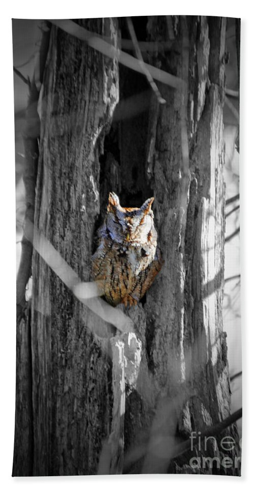 Owl Beach Towel featuring the photograph The Owl by Jost Houk
