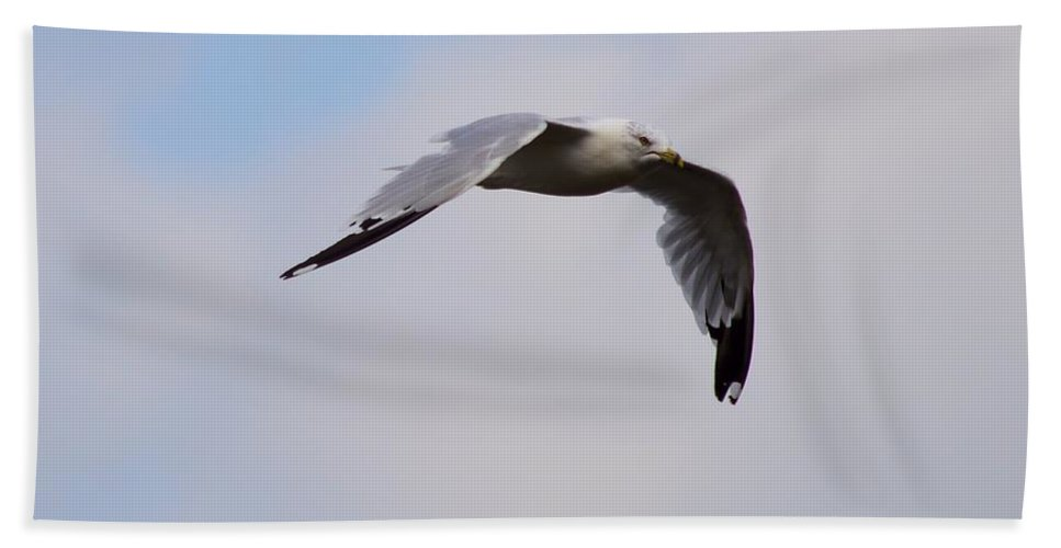 Seagull Beach Towel featuring the photograph The Quest by Bonfire Photography