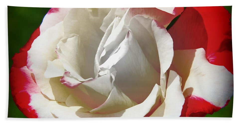 Flower Beach Towel featuring the photograph The Rose by Athala Bruckner