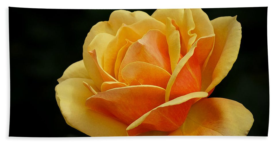 Beautiful Beach Towel featuring the photograph The Rose by Ernie Echols