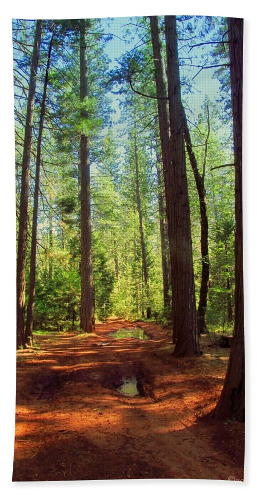Forest Beach Towel featuring the photograph The Scenic Route by Joyce Dickens