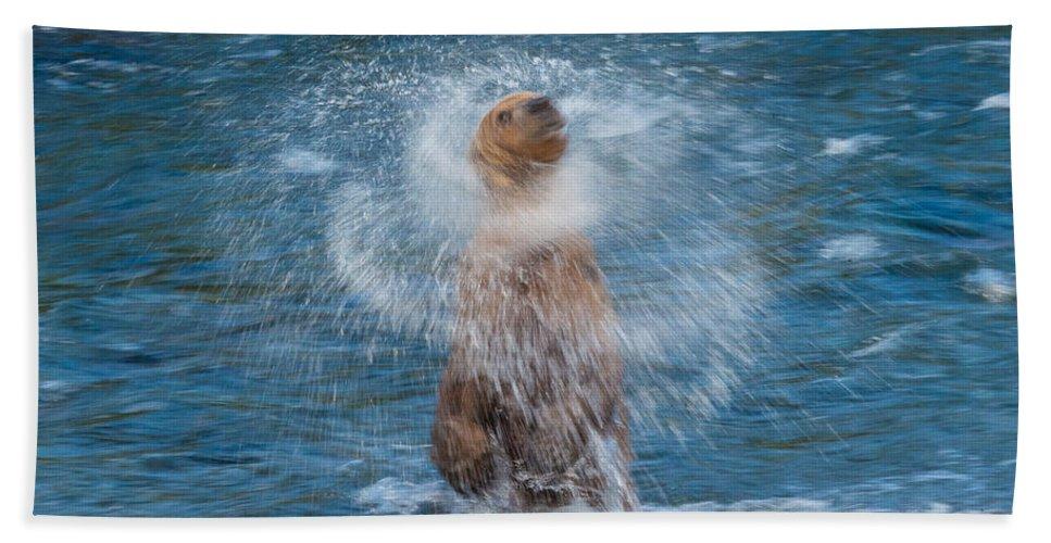 Alaska Beach Towel featuring the photograph The Shake by Joan Wallner