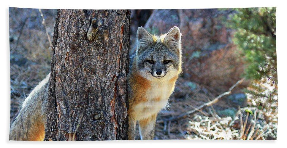 Fox Photograph Beach Towel featuring the photograph The Shy Fox by Jim Garrison