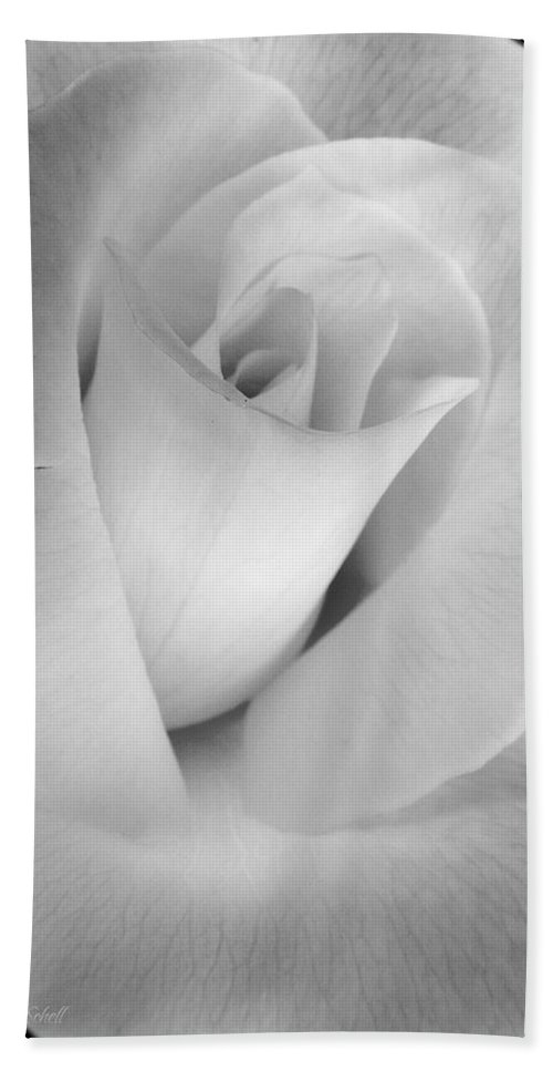 Rose Beach Towel featuring the photograph The Silver Rose In Portrait by Jennie Marie Schell