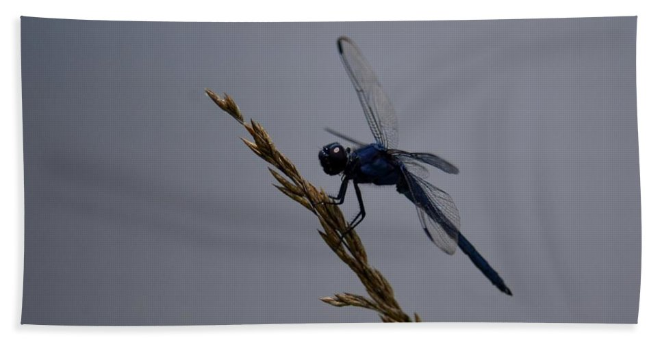 The Slaty Skimmer Beach Towel featuring the photograph The Slaty Skimmer by Maria Urso
